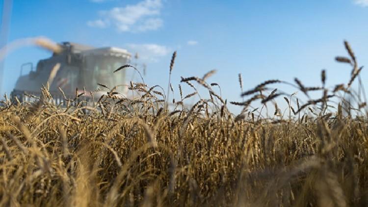 بوتين: لدينا القدرة لنصبح أكبر منتج للغذاء عالميا