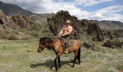 بوتين يهدي ترامب حصاناً نادراً